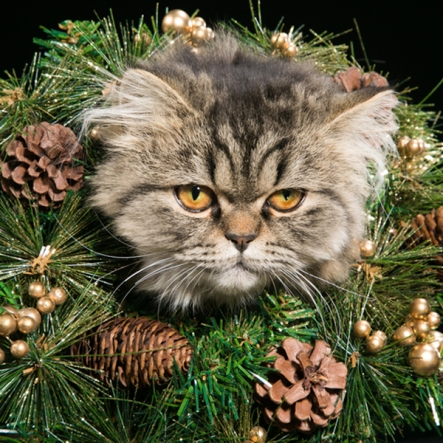 christmas-cats-sad-wreath